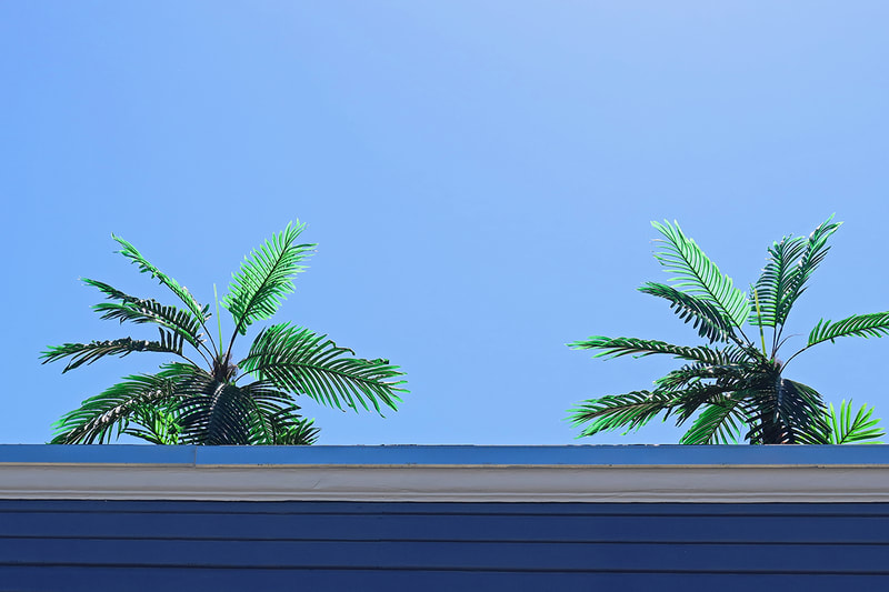 fake palm trees