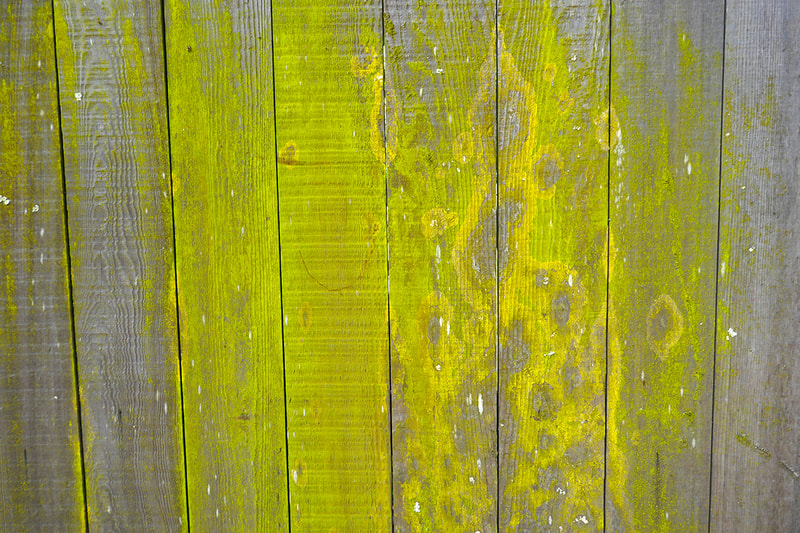 green substance on fence