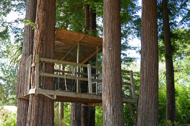 tree house in redwoods