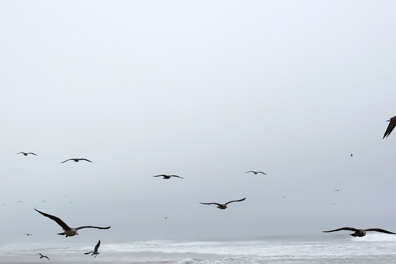 seagulls flying at beach