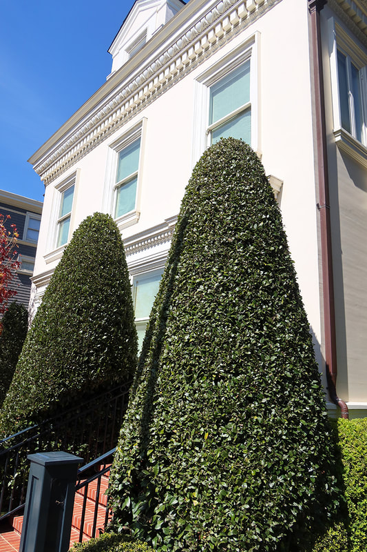 two cone shaped bushes